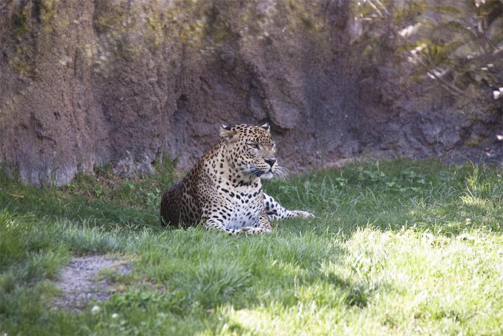 leopardo.jpg