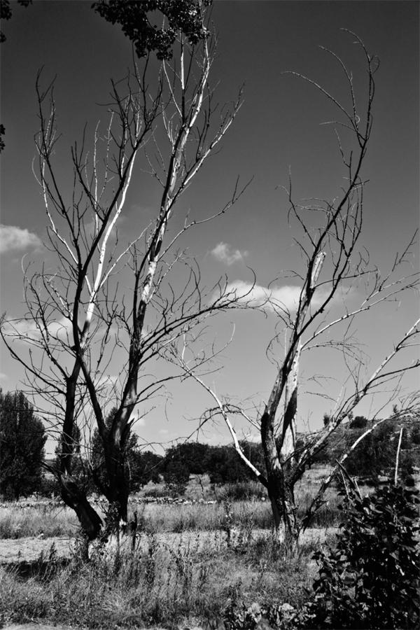 naturaleza_muerta.jpg
